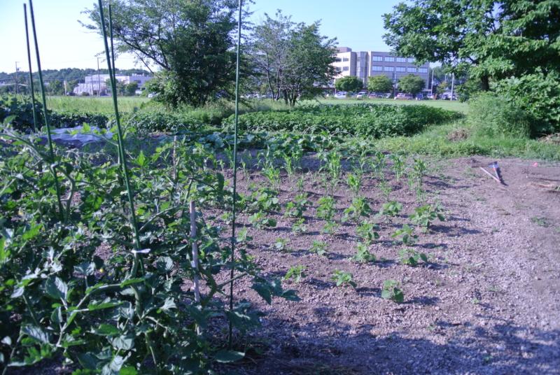 野菜 種まき・苗植え ちょこっと体験